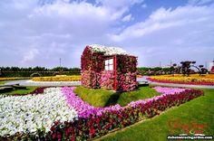 Dubai Miracle Garden (13)