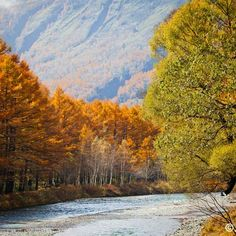 "@smallkit00's photo: ""#autumn #nature #nature_lovers #naturelovers #japan #japanaddict #japanlovers #beauty #colorful #kamigochi #上高地 #紅葉 #秋"""