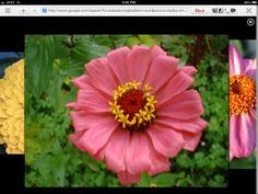 One of my top favorite flowers