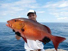 A világ talán legfurcsább tanulmányát amerikai tudósok készítették, méghozzá Floridában, és kiderül belőle: a nők fele vonzódik a halat tartó férfiakhoz.