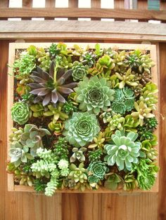 Hanging succulents wall picture