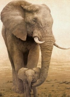 .Mother elephant protecting her child.