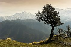 http://www.flickr.com/photos/amar/5633428236/in/faves-imtheunicorn/  #tree #mountains #photography #nature #landscape