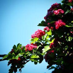 Levende hegn ved Sandager  #visitfyn #fyn #nature #visitdenmark #naturelovers #mothernature #natur #denmark #danmark #dänemark #landscape #assensnatur #assens #mitassens #nofilter #fynerfin #vielskernaturen #visitassens #instapic #picoftheday #sommer #summer2016 #flowers