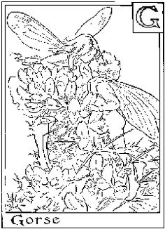 Flower Fairies Coloring Pages from wwwcoloring pages and more