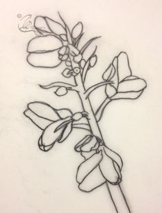 A tracing of a Gorse outline. Online Tutorials, Body Mods, Botanical Art, Flower Tattoos, Line Drawing, Art Lessons, Tatting, Body Art, Ink