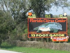 Google Image Result for http://mlblogsraysrenegade.files.wordpress.com/2011/03/florida_citrus_center_13_foot_gator1.jpg