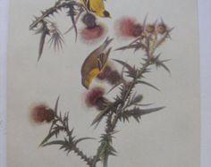 "Bird Art Vintage Audubon Goldfinch Lithograph Print 9"" x 12"" Favorite Birds Yellow Bird Pink Thistle"