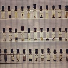 With over a million specimens, the Museum's spider collection is the largest in the world #spidersalive