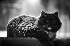 Laziest cat 2010 by DIMA SARNIKOV | PHOTODOM.COM