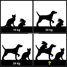 chien chat lapin balance Exit Games, Eye Illusions, Math Talk, Math Memes, Math Challenge, Spy Party, Picture Puzzles, Maths Puzzles, Adult Fun