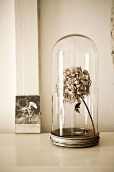 Cloches, also known as bell cloches, glass domes or bell jars, are more than ever back in home decor, and bring a refined decoration touch to any interior. Glass Dome Display, Glass Domes, Glass Vase, Glass Bell Jar, The Bell Jar, Bell Jars, Deco Rose, Flower Bar, Deco Floral