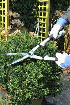Beukenhaag snoeien hoe snoei je een beukenhaag tuin tips pinterest gardens - Outdoor tuinieren ...