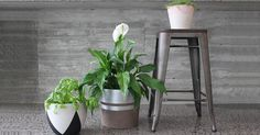 Metallic patterned pot plants are everywhere right now and we've got an easy way to incorporate this trend in your home - without the big price tag.
