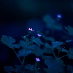 #flowers #flower #nature #naturelovers #canon #garden #grasses #blue #naturelovers #yellowkorner #yellow #spring