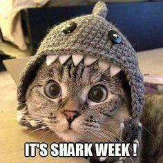 Shark Week Mania!!!