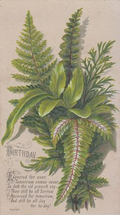 Birthday Expected for Ever Green Ferns Embossed Victorian Card C 1880s | eBay