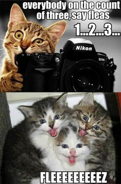 """Fleeeeeeeeez! Hate cats, but this is cute. Reminds me of the YouTube video """"kittens inspired by kittens"""""""