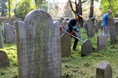 AJC volunteers at the Jewish cemetery in Oświęcim *** Wolontariusze Centrum Żydowskiego na cmentarzu w Oświęcimiu
