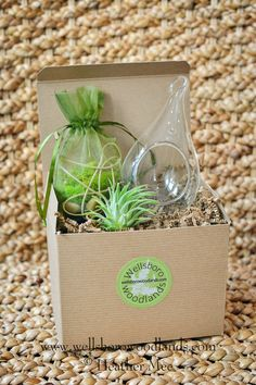 Air Plant Terrarium Kit Nature Gift Nature Lover Gift | Etsy Air Plant Terrarium, Gifts For Nature Lovers, Air Plants, Gift For Lover