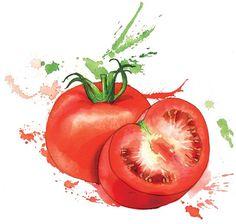 Vegetables — by Georgina Luck Watercolor Fruit, Watercolour Painting, Watercolor Flowers, Watercolors, Vegetable Drawing, Vegetable Painting, L'art Du Fruit, Fruit Art, Georgina Luck