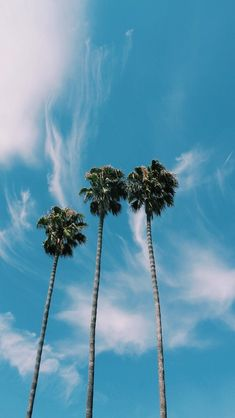 Summer Wallpaper Phone Backgrounds Palm Trees 25 Ideas For 2019 Summer Wallpaper, Tree Wallpaper, Wallpaper Ideas, Beach Aesthetic, Blue Aesthetic, Summer Aesthetic, Aesthetic Iphone Wallpaper, Aesthetic Wallpapers, Phone Backgrounds