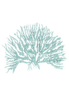 Sea Coral in Woodlawn IV Print by driftwoodinteriors on Etsy, $25.00
