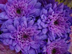 Resultado de imagem para purple