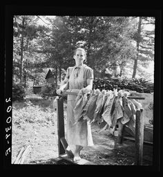 Wife of tenant farmer, Mrs. Oakley, works stringing tobacco during the harvest season. Granville County, North Carolina