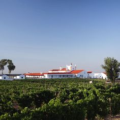 Portugal, Wine Hotel, Modern Architects, Old World, Dates, Vineyard, Villa, Building, Travel