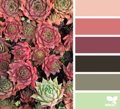 succulent hues -- possible palette for kitchen. light grey for walls, dark wood table and chairs, and other colors for decor Colour Pallette, Color Palate, Colour Schemes, Color Combos, Color Patterns, Design Seeds, Palette Design, Cactus E Suculentas, Color Swatches