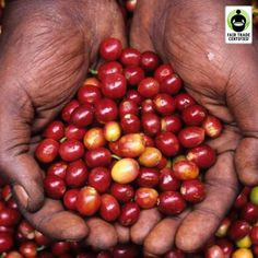 Happy National Coffee Day!  As you sip, remember the hands that picked the coffee cherries that became the beans that landed in your cup.