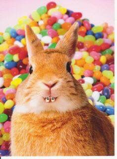 Bunny with braces!