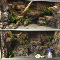 Modern & Unique Reptile Terrarium Ideas - My site Terrariums Gecko, Decor Terrarium, Lizard Terrarium, Terrariums Diy, Terrarium Stand, Reptile House, Reptile Room, Reptile Cage, Vivarium