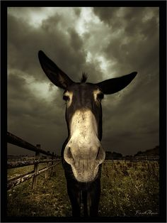 Reminds me of the donkey that lived in the pasture next to my grandparents house. Farm Animals, Animals And Pets, Funny Animals, Cute Animals, Amor Animal, Mundo Animal, Beautiful Creatures, Animals Beautiful, Regard Animal