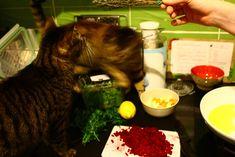 Mit Miezen in der Küche Plastik Box, Japanese, Ethnic Recipes, Food, Beetroot, Japanese Language, Essen, Yemek, Meals