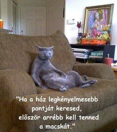 Cat Flats, Grumpy Cat, Cat Memes, Funny Photos, Smiley, Animals And Pets, I Laughed, Knight, Jokes