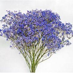 purple babys breath Blue Wedding, Wedding Flowers, Wedding Stuff, Wedding Ideas, Freesia Flowers, Fall Floral Arrangements, Plant Fungus, Purple Baby, Love Garden