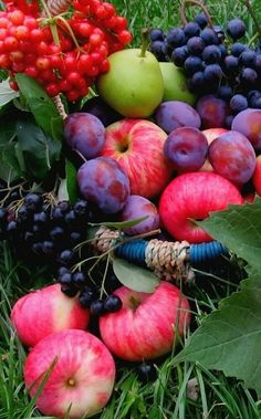 Colorful Fruit