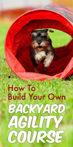 How to Build Your Own Backyard Agility Course