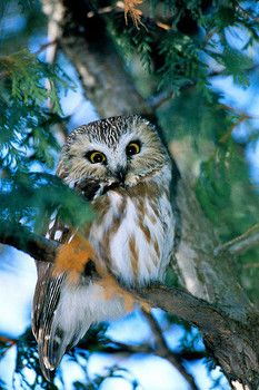 Learning about owls in the preschool classroom