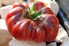 Eclatement d'une tomate