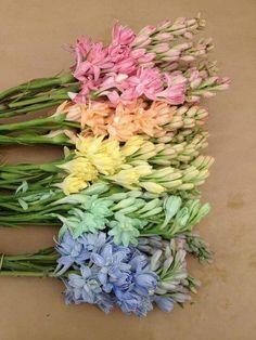 feminine and colour candy colours #enchantedbrides