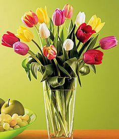 Resultados de la búsqueda de imágenes: imagenes de tulipanes - Yahoo Search