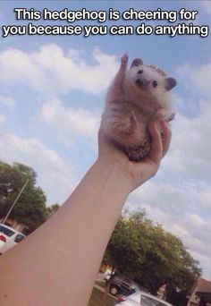 This hedgehog is your number 1 fan xxxx