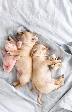 25 Puppies Stock Photos To Make You Smile