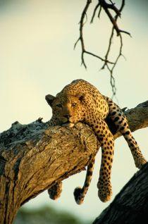 National Geographic - Bilder und Kunst von National Geographic - ARTFLAKES.COM