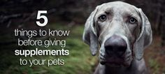 If you're thinking about treating your cranky cat or creaky dog, be sure to do a little research first. #pets