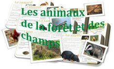 LECTURE : ATELIER en AUTONOMIE - Les animaux de la forêt et des champs • ReCreatisse