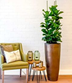 Modern Decor, Modern Design, Fiddle Leaf Fig Tree, Healthy Food Delivery, Healthy Shopping, Diy Entertainment Center, Interior Plants, Ficus, House Plants